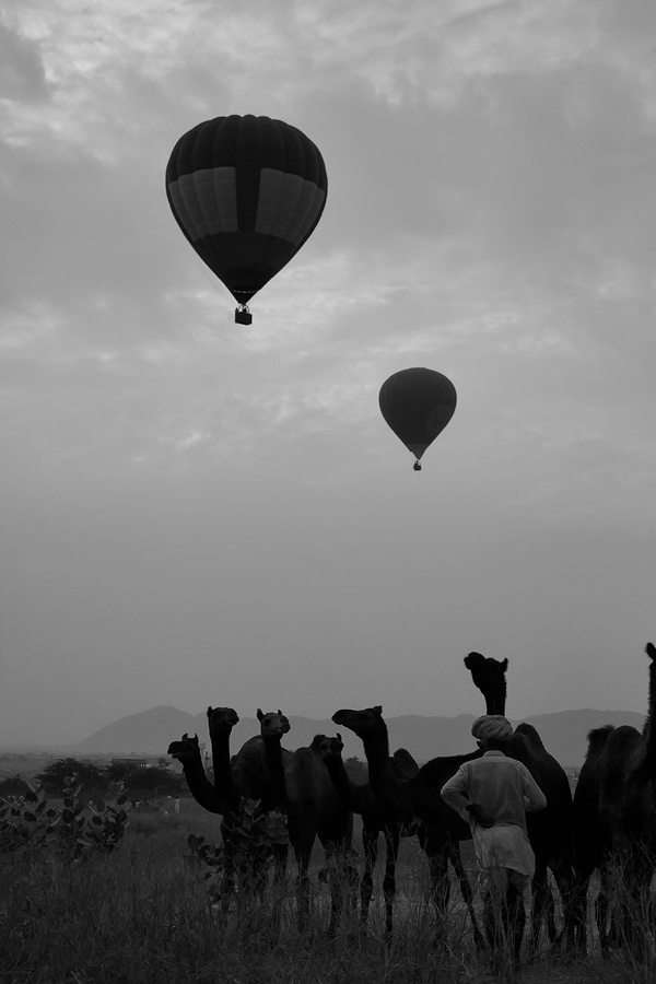 pushkar-camel-balloon